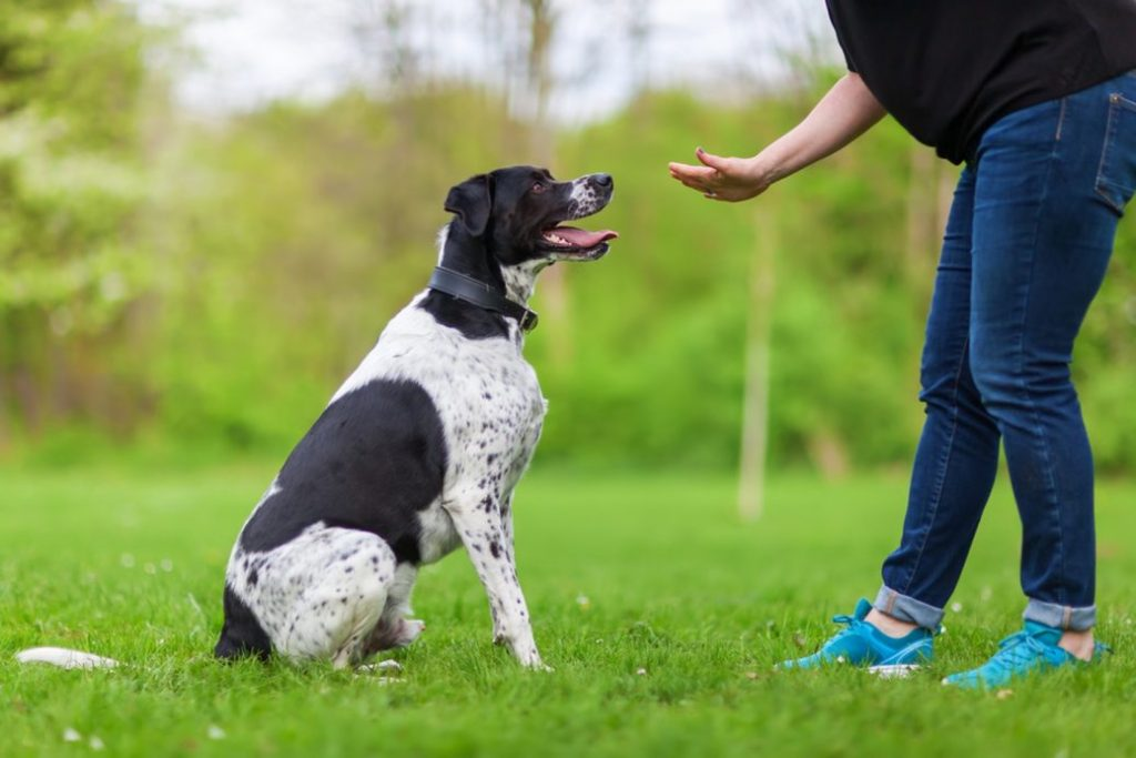 Canine Instructor - jobs for disabled people
