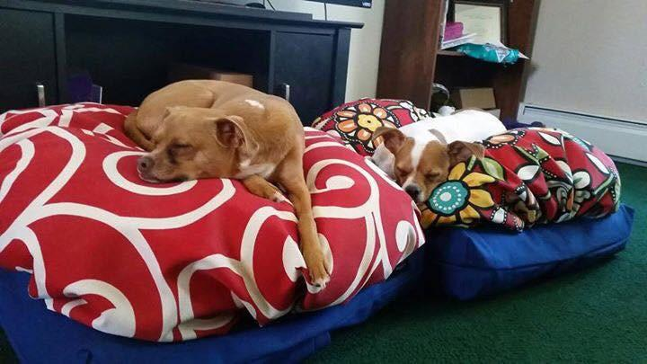 Snugatti Pet Beds